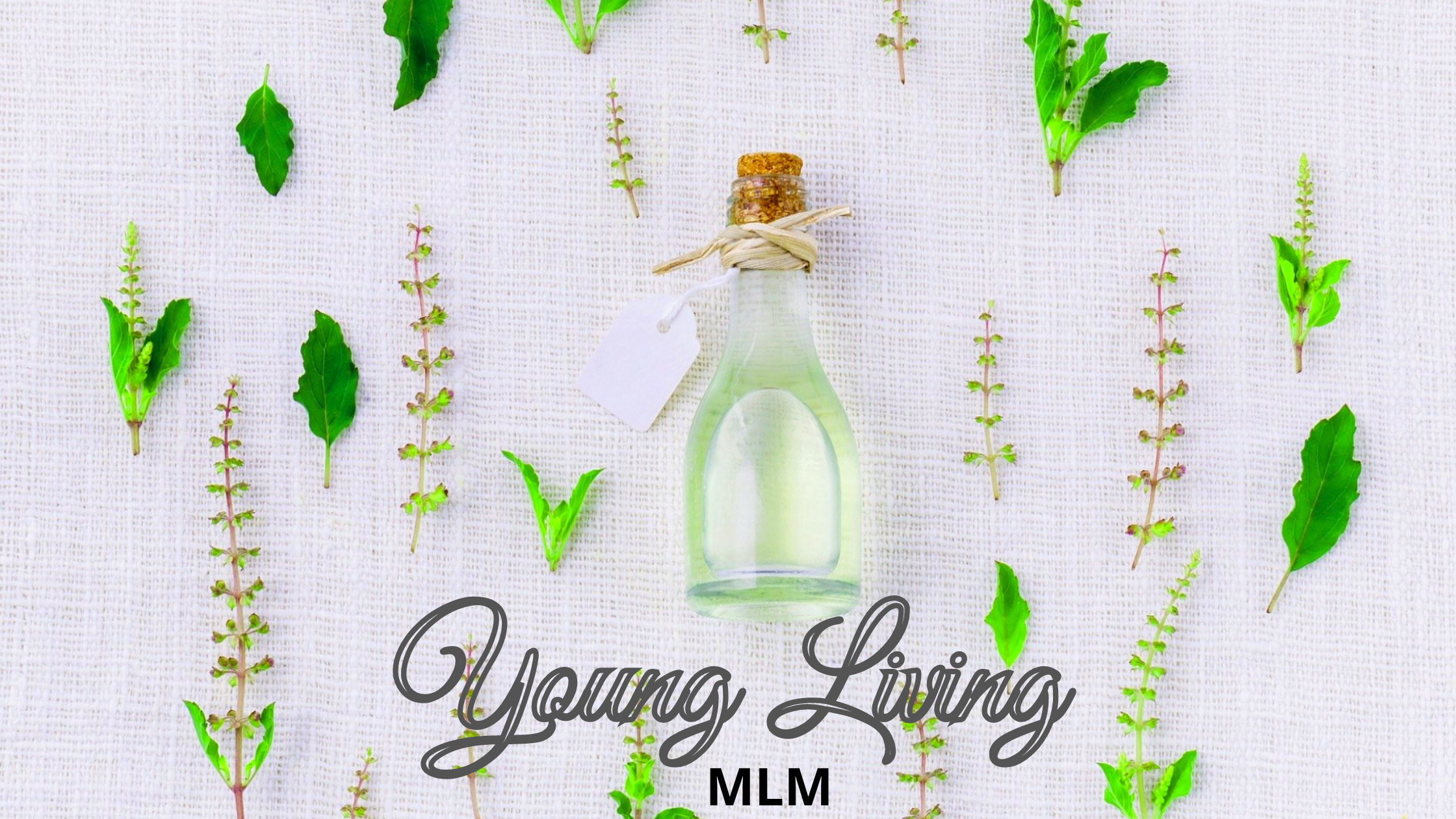 Is Young Living MLM a scam